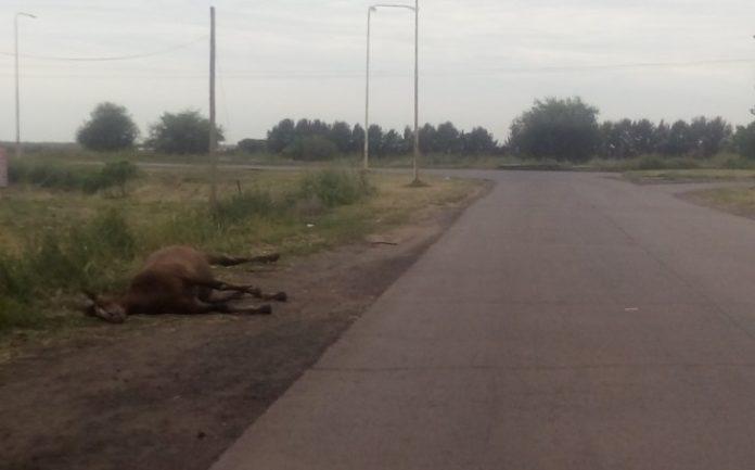 San Nicolás: salía de trabajar, chocó contra un caballo y murió