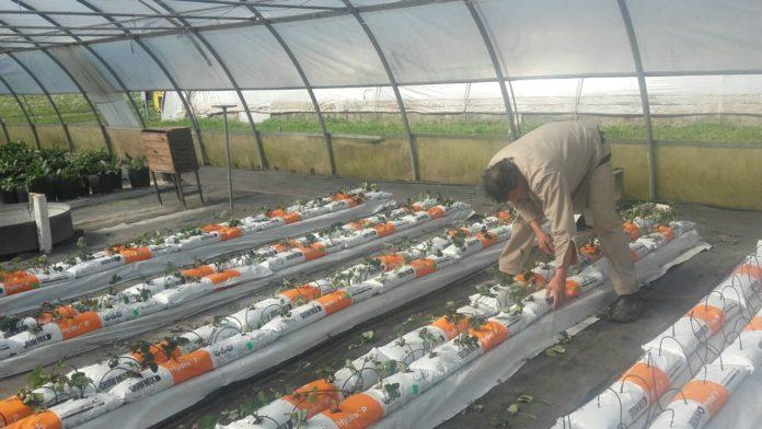 Provincia creó un programa para fortalecer a las cooperativas agropecuarias