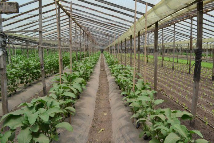 El Gobierno bonaerense financia las prácticas agroecológicas. (Prensa MDA)