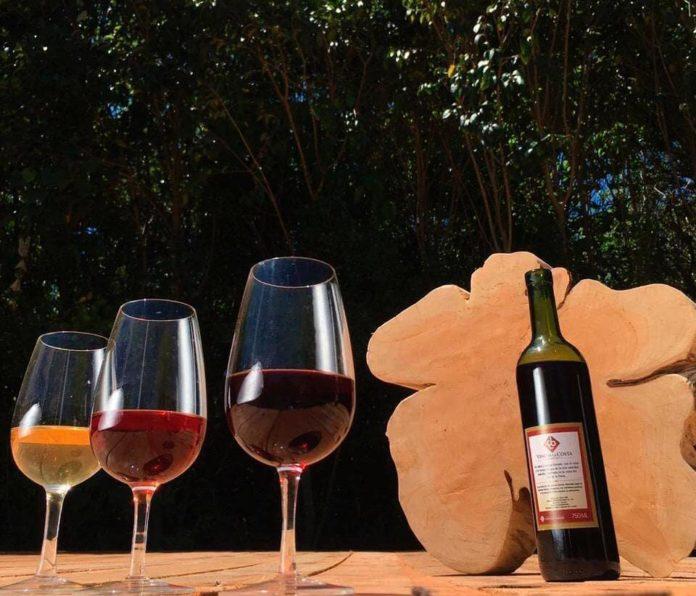 Este año la Fiesta del Vino de la Costa, como muchas otras, será virtual. (Vino Costa de Berisso)
