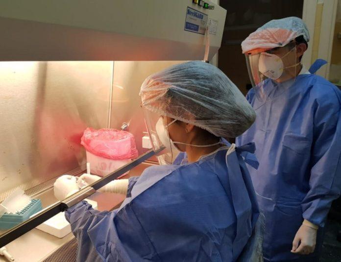 Coronavirus en Argentina: confirman otras 36 muertes y el total de fallecidos asciende a 7.402