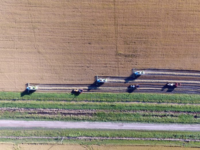 Un campo en plena etapa de cosecha. (Argentina.gob.ar)