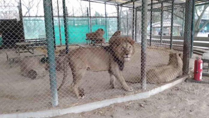 Investigarán denuncias de maltrato animal en el zoo de Luján. (Defensoría del Pueblo bonaerense)