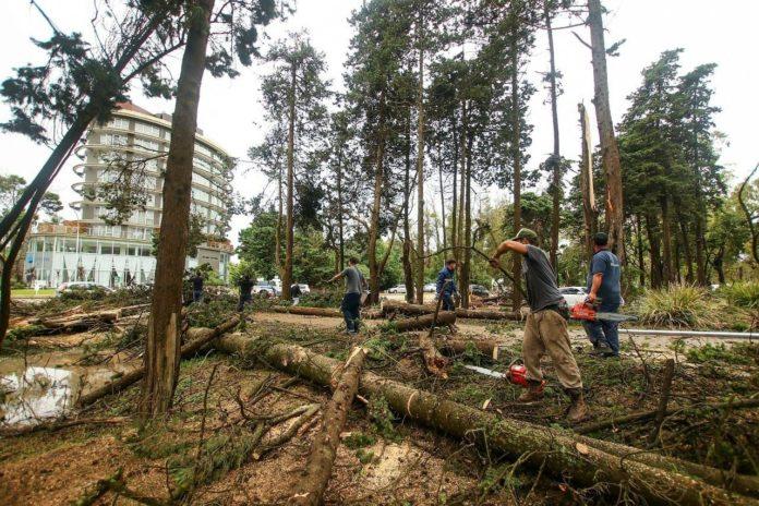 El tornado dejó, entre otras consecuencias, cientos de árboles caídos. (Facebook Martín Yeza)