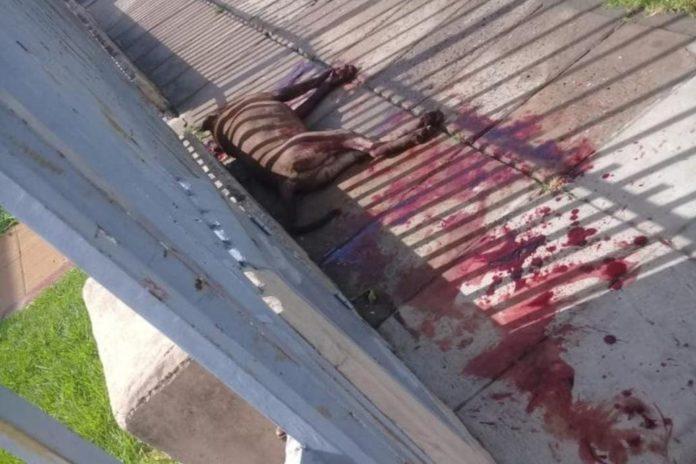 El perro estaba sin correa ni bozal en la calle y mordió al menos a cinco vecinos