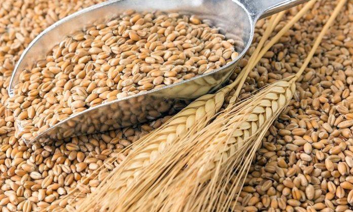 Buscan insertar la producción de trigo bonaerense en el mercado mexicano. (Prensa MDA)