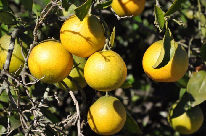 """La fruticultura es """"una actividad que contribuye al mejoramiento de la vida rural y a la diversidad productiva"""" bonaerense. (Prensa MDA)"""