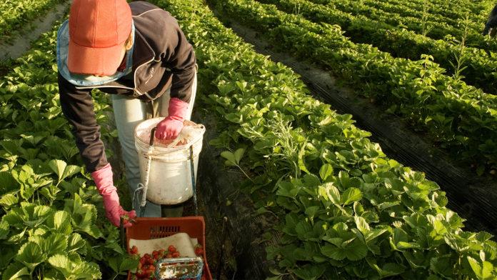 Provincia informó a productores de Carbap sobre los beneficios por el cumplimiento de buenas prácticas