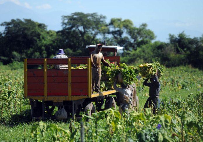 Ya es oficial el plan de promoción y protección del trabajo rural temporal y estacional. (Télam)