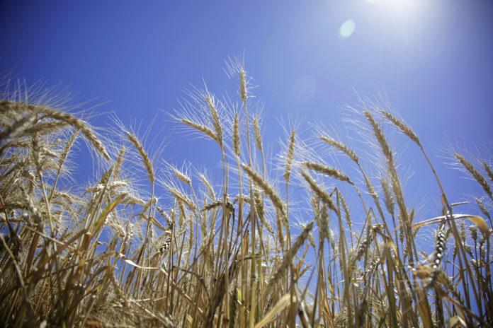Provincia creó un programa para mejorar genéticamente los cultivos